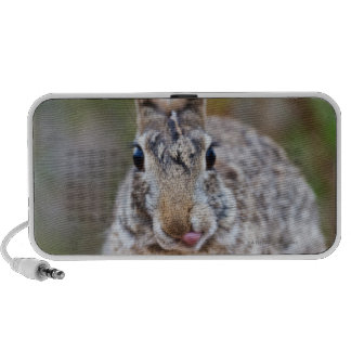 Texas cottontail rabbit travel speakers