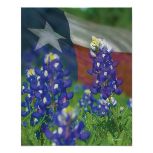 Texas flag bluebonnets poster