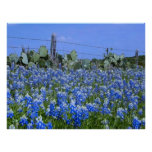 Texas Hill Country Bluebonnets/Cactus Art Print