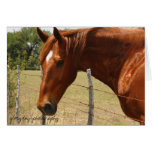 Texas Hill Country Horse Greeting Card