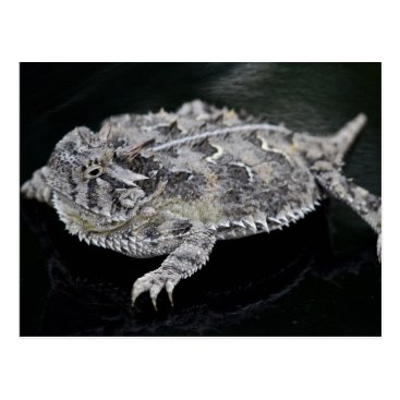 HTMimages Texas Horned Lizard - Texas State Reptile Postcard