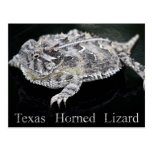 Texas Horned Lizard - Texas State Reptile Postcard