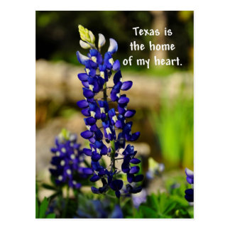Texas is the Home of my Heart Bluebonnet Poastcard Postcard