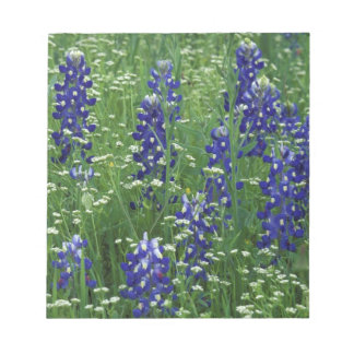 Texas, Lake Buchanan. Texas Bluebonnet and Wild Notepad