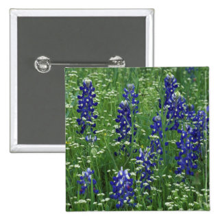 Texas, Lake Buchanan. Texas Bluebonnet and Wild Pinback Button