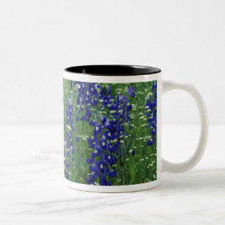 Texas, Lake Buchanan. Texas Bluebonnet and Wild Two-Tone Coffee Mug