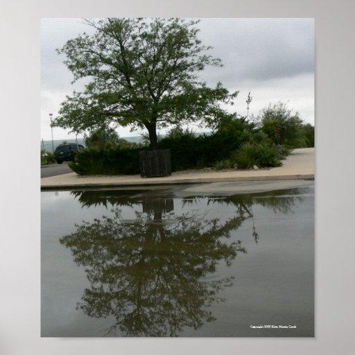 Texas Locust Reflected Poster