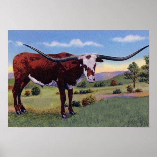 Texas Long Horn Steer Poster