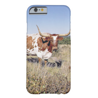 Texas Longhorn Breed (photo) Barely There iPhone 6 Case