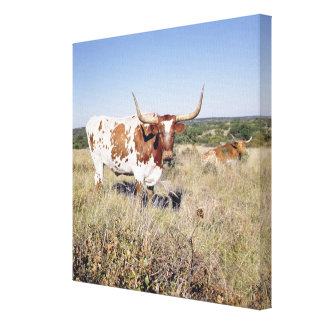 Texas Longhorn Breed (photo) Stretched Canvas Print