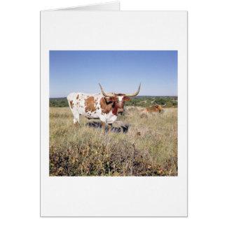 Texas Longhorn Breed (photo) Card