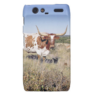 Texas Longhorn Breed (photo) Droid RAZR Cover