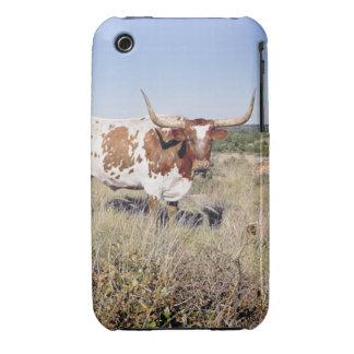 Texas Longhorn Breed (photo) iPhone 3 Case