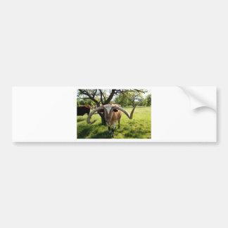 Texas Longhorn Bull Bumper Sticker