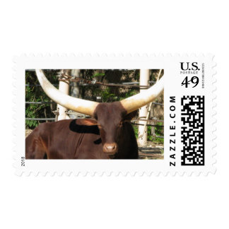 Texas Longhorn cattle Postage Stamp