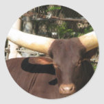 Texas Longhorn cattle Round Stickers