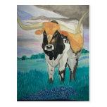 Texas Longhorn Post Card