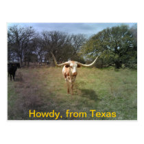 Texas Longhorn - Postcard