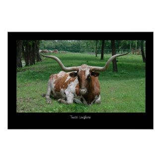Texas Longhorn Poster Print