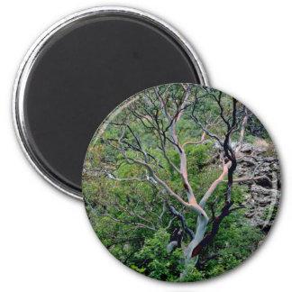 Texas Madrone Tree Refrigerator Magnet