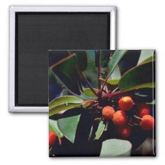 Texas mandrone tree refrigerator magnet