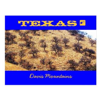 Texas Mesquite Postcard