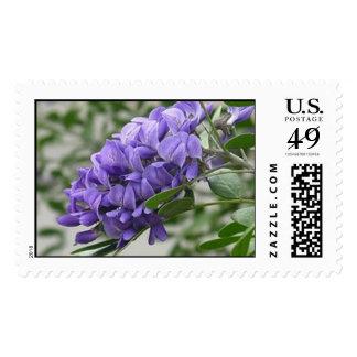 Texas Mountain Laurel Postage Stamp
