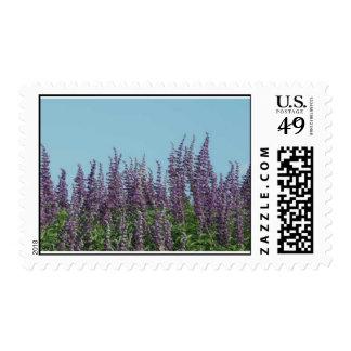 Texas purple stamp