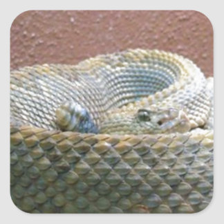 Texas Rattler Photograph Square Sticker