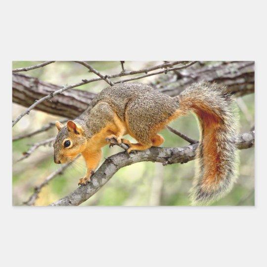 Texas Red Squirrel Rectangular Sticker