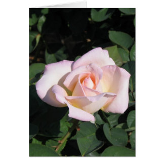 Texas Rose in Pink Card