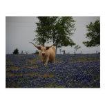 Texas Royalty Postcard