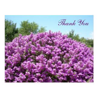 Texas Sage Thank You Postcard