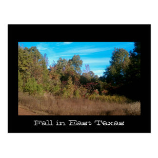 Texas Series Postcard