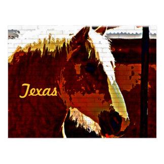 Texas, Sorrel Horse In Profile Postcard