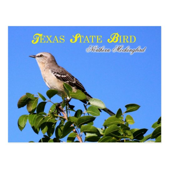 texas state bird northern mockingbird postcard