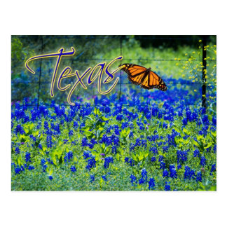Texas State Flower - Bluebonnets Post Card