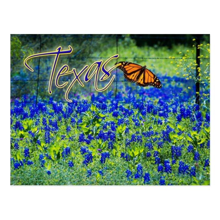 Texas State Flower Bluebonnets Postcard Zazzle Com