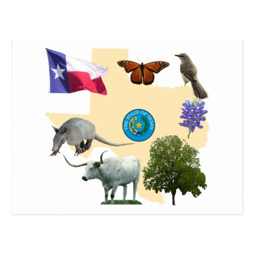 Texas State Symbols Post Cards