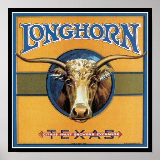 Texas Steer Longhorn Poster