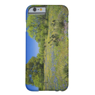 Texas, Texas Hill Country, Low bladderpod, Barely There iPhone 6 Case