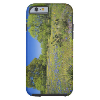 Texas, Texas Hill Country, Low bladderpod, Tough iPhone 6 Case