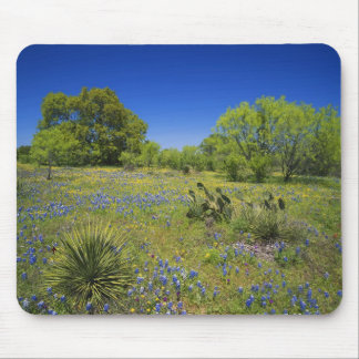 Texas, Texas Hill Country, Low bladderpod, Mouse Pad