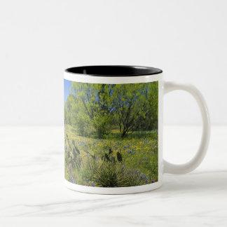 Texas, Texas Hill Country, Low bladderpod, Coffee Mugs