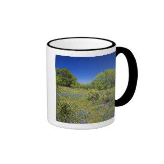 Texas, Texas Hill Country, Low bladderpod, Mugs