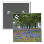 Texas, Texas Hill Country, Texas Paintbrush and 2 Inch Square Button