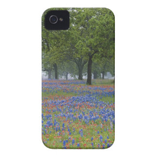 Texas, Texas Hill Country, Texas Paintbrush and iPhone 4 Cases