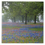 Texas, Texas Hill Country, Texas Paintbrush and Ceramic Tile