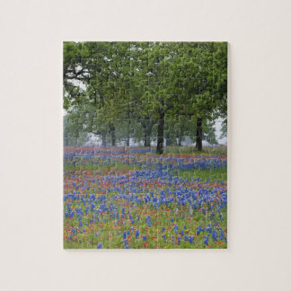Texas, Texas Hill Country, Texas Paintbrush and Jigsaw Puzzle
