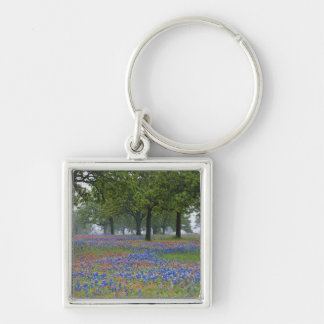 Texas, Texas Hill Country, Texas Paintbrush and Keychain